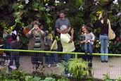Visitors photographing in Orchid Gardens