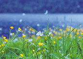 White butterfly sitting on green grass